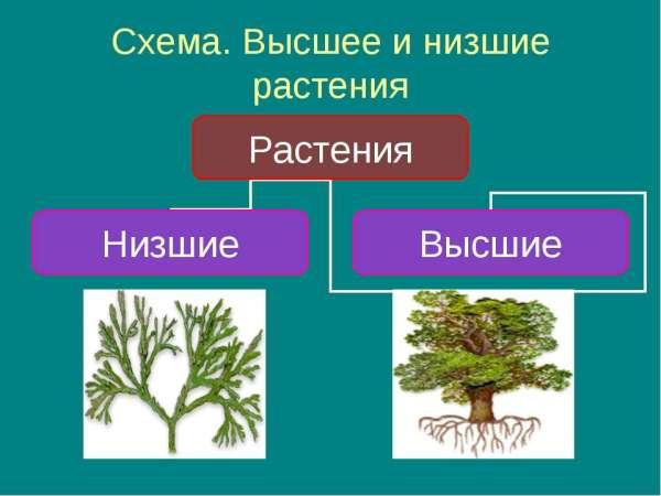"""Презентация """"Цветковые растения 3 класс"""" - скачать бесплатно"""