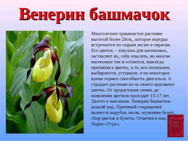 Красная Книга России Растения Описание И Фото