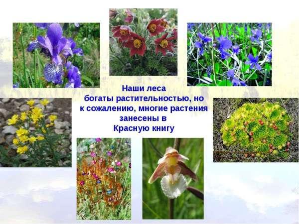 Какие Животные И Растения Подмосковья Занесенные В Красную ...
