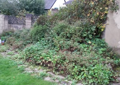 Overgrown bushes and shrubs Cutback