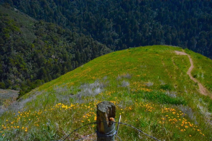 Before & After – a wildflower field