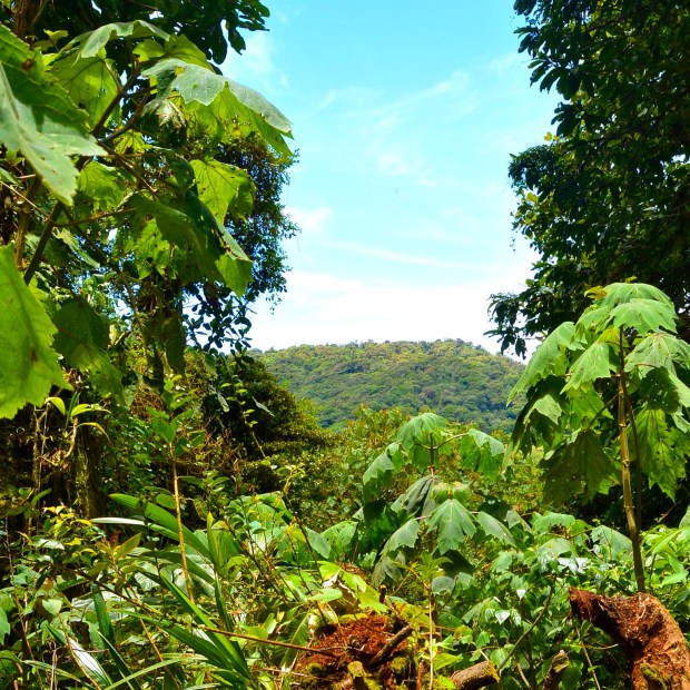 Lush Views in Monteverde, Costa Rica