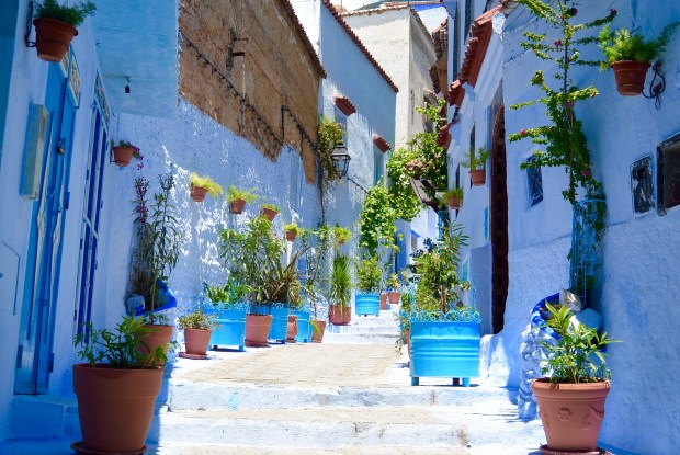 Plants in Chefchaouen