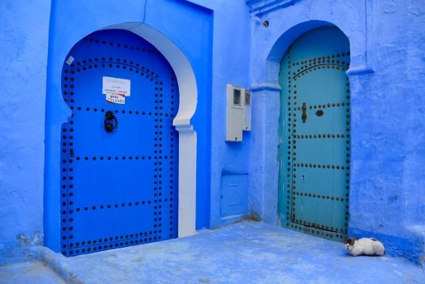 Cat sitting in front of blue doors
