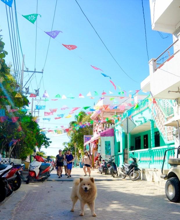 Dog, Isla Mujeres