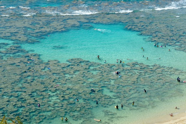Snorkelling at Hanauma Bay, Oahu