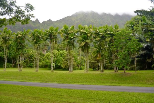 Ho'omaluhia Botanical Gardens, Oahu