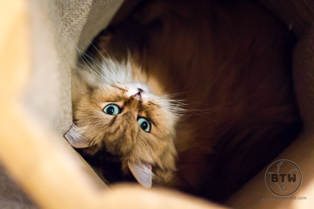 A cat looking up at a cat cafe in Tokyo, Japan