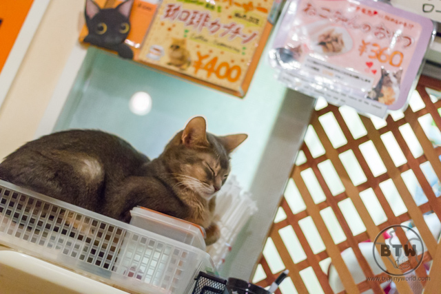 A cat sitting in a basket at a cat cafe in Tokyo, Japan