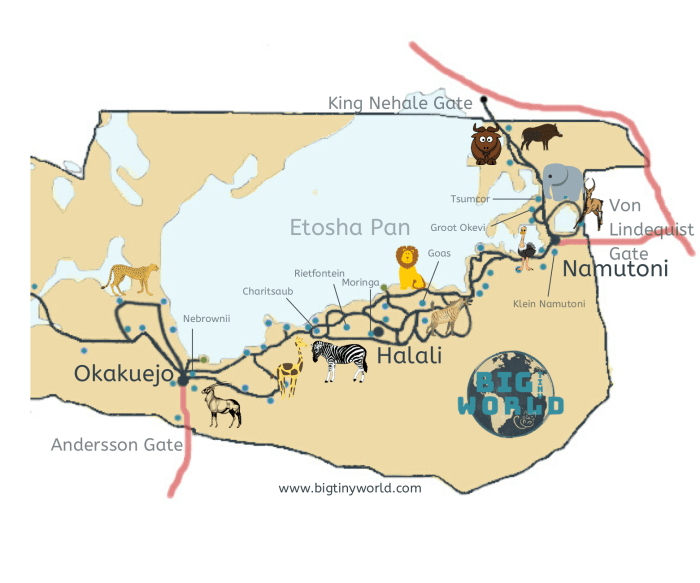 Etosha National Park viewing guide map