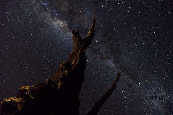 Old tree with stars at Sesriem Campsite Namibia