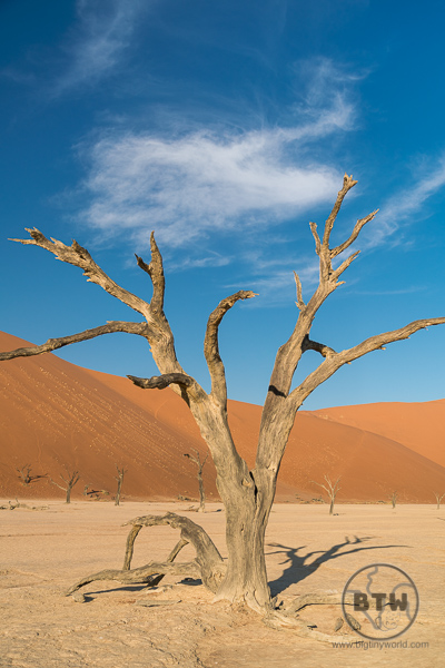Deadvlei on a sunny day with clouds above