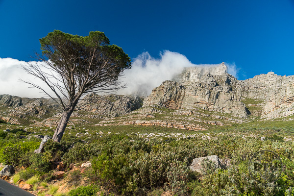 Table Mountain from Below - Cape Town