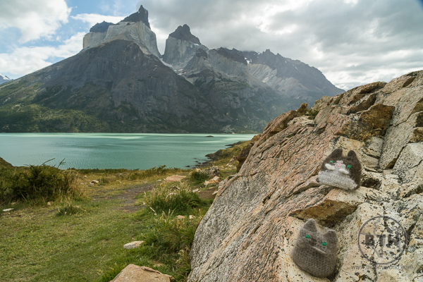 Our little travel kitties in front of a scenic mountain in Torres Del Paine National Park