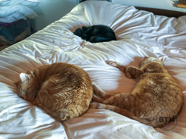 Cats curled up on a bed in Montenegro