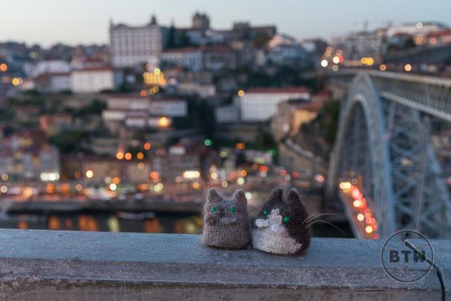 Sunset with travel kitties @shadykitties