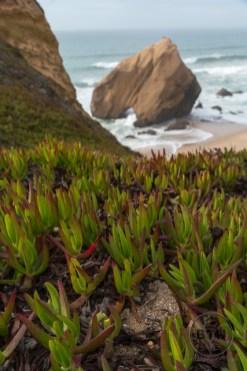 Costal greenery at Santa Cruz Beach