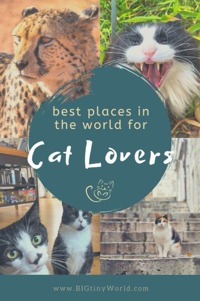 Best Places in the World for Cat Lovers | If you love cats as much as we do, then you'll want to check out these top cat hotspots around the world. Get your cat fix where purrs abound!  Read more here! | BIG tiny World Travel | #bigtinyworld #cats #travel #catsaroundtheworld #catlover