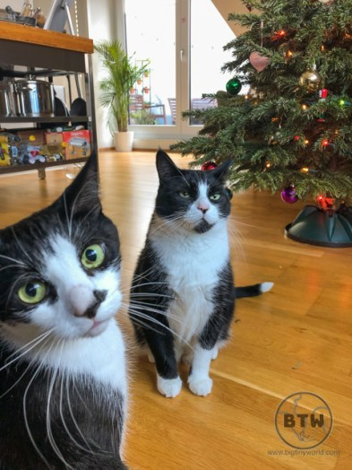 Ron and Oscar, two tuxes we catsat in Basel, Switzerland