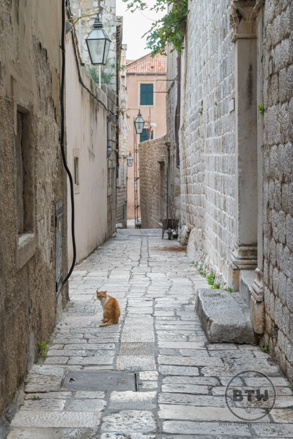 A cat sitting in a narrow alley in Dubrovnik, Croatia