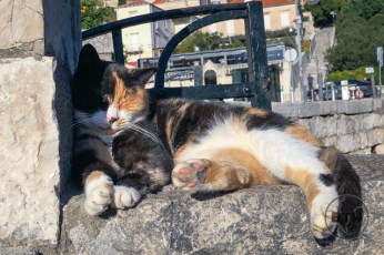 A calico cat sleeping on a wall just outside the walled center of Dubrovnik, Croatia