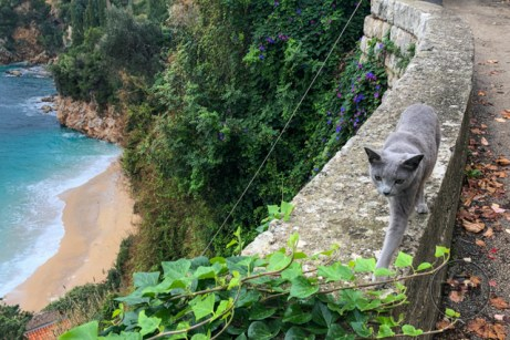 A grey cat walking along a wall at the beach in Dubrovnik, Croatia