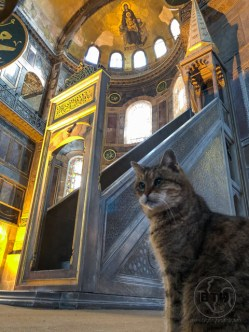 A tabby cat sitting at the altar in the Hagia Sophia in Istanbul, Turkey