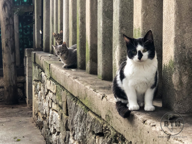 Three cats sitting on a wall in a park in Split, Croatia