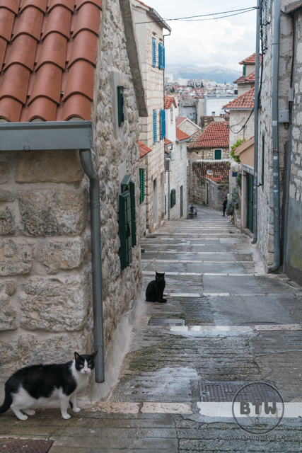 Cats in an alley leading up to the top of the western hill in Split, Croatia