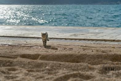 A tabby walking on the beach in Zadar, Croatia