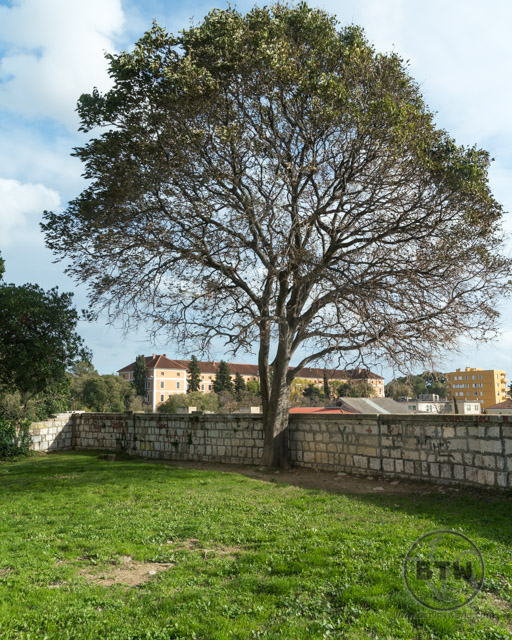 A tree atop the hill in Old Town, Zadar, Croatia