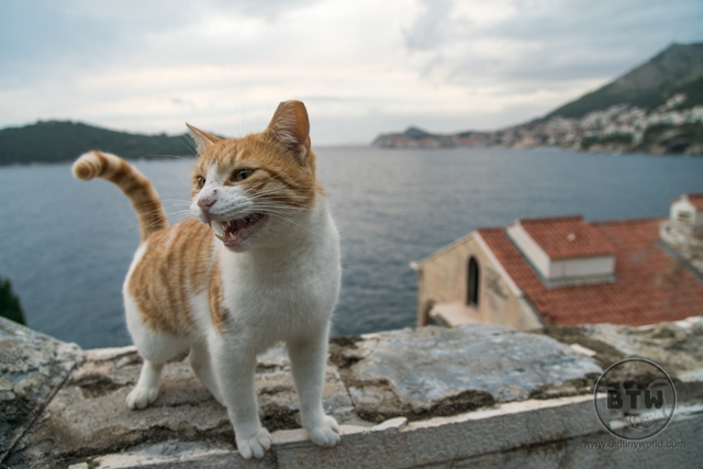A meowing cat at the ruins of the Belvedere Hotel in Dubrovnik, Croatia