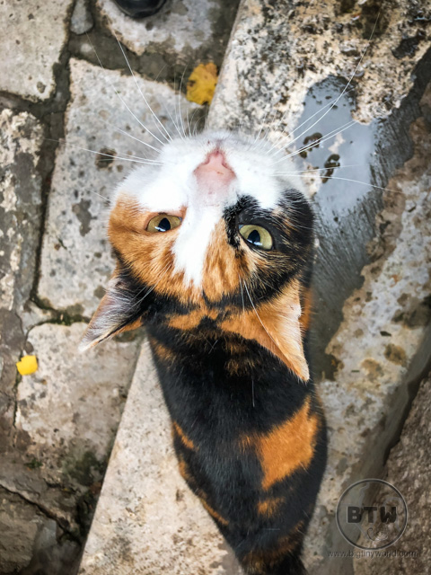 A calico cat in Dubrovnik, Croatia
