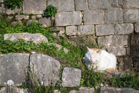 A cat snoozing on a wall in Kotor, Montenegro