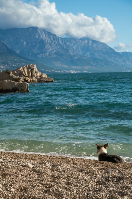A dog lounging on a rock beach just outside of Omis, Croatia