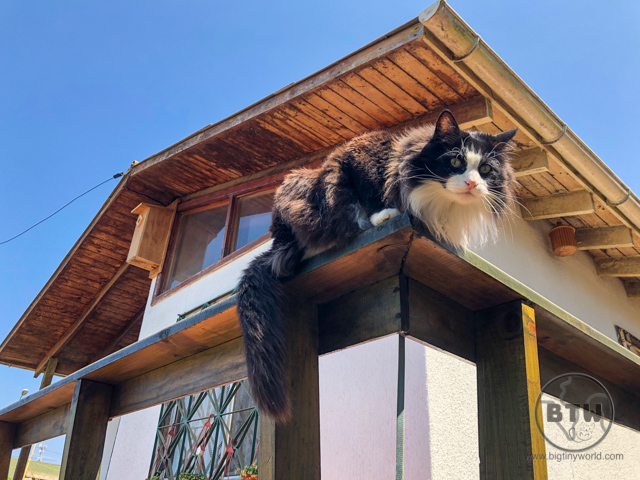A longhair tuxedo cat perched on a porch railing outside a house in Las Cruces, Chile