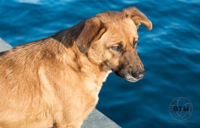 Stray dog in Istanbul