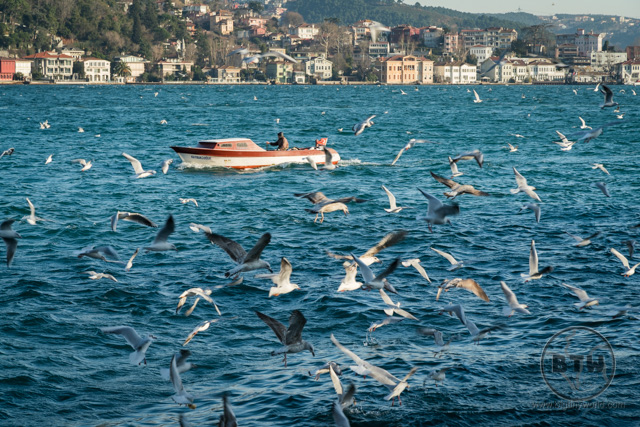 Istanbul Ferry Ride on Bosphorus Seagulls