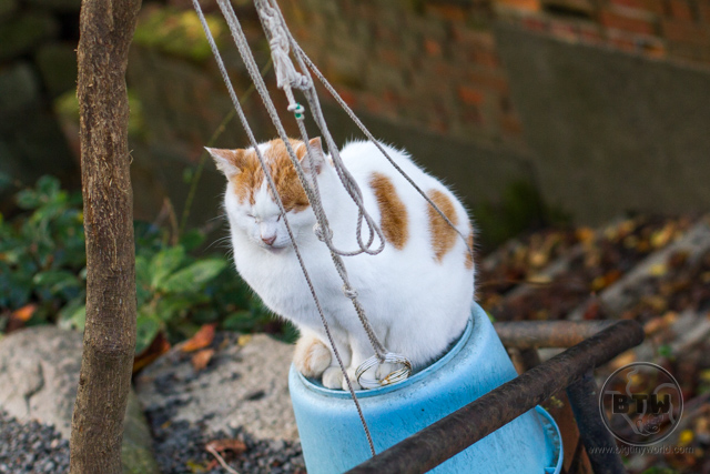 A street cat sitting on an overturned bucket along the Philosopher's Path in Kyoto, Japan