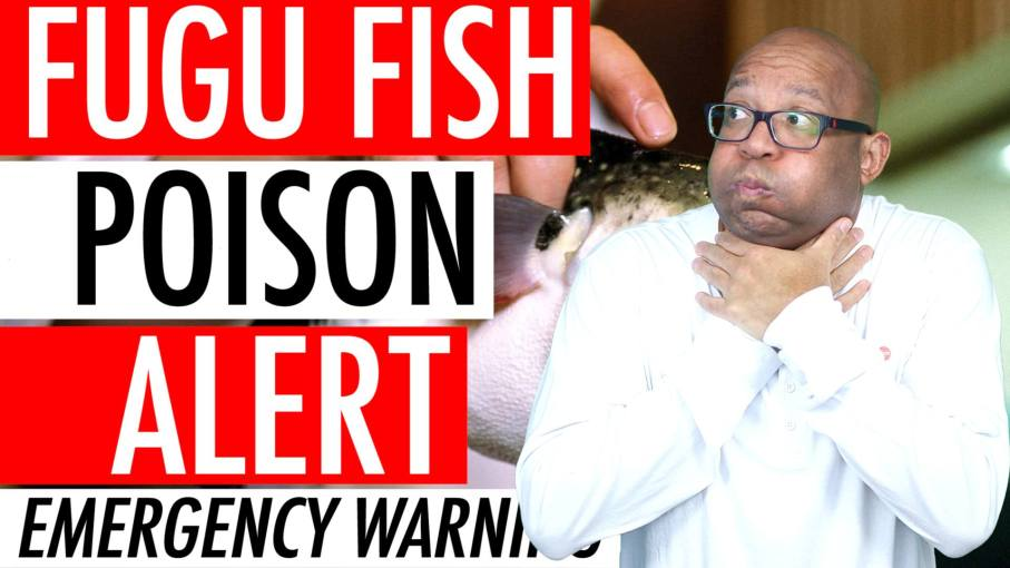 Fugu Puffer Fish Poison Alert 2018 - Deadly Blowfish Recall Activates Japan Emergency Warning 🇯🇵 🐡 ⚠️