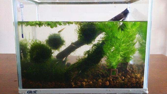 水草をトリミングした後の水槽