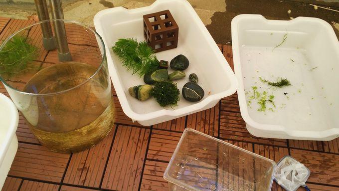 産卵用の水槽の水換え