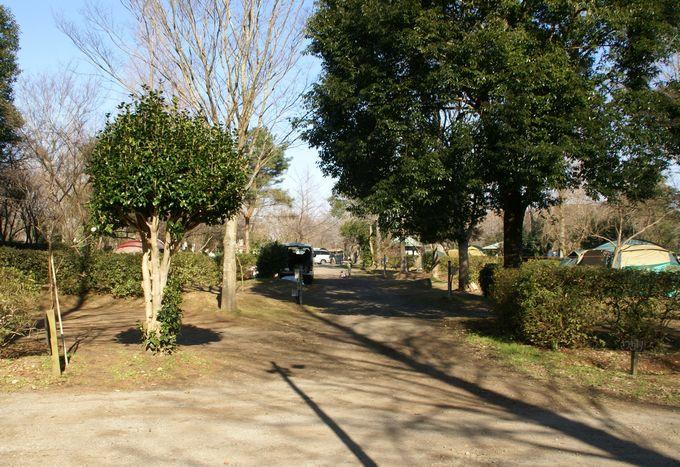イレブンオートキャンプパーク サイト風景7