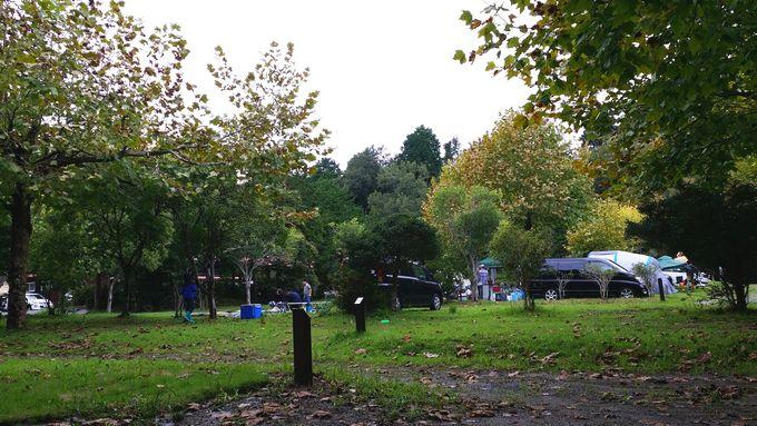 ロマンの森オートキャンプ場 サイト7