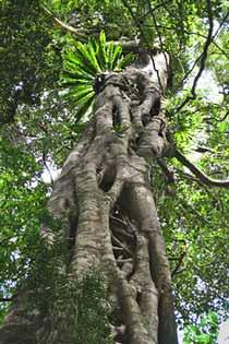 Mountain Trek Adventures Subtropical Rainforest