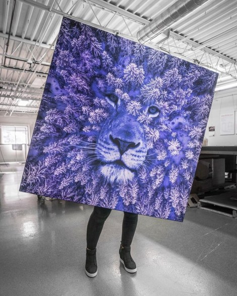 Big lion Wall Art Huge Decor Prints