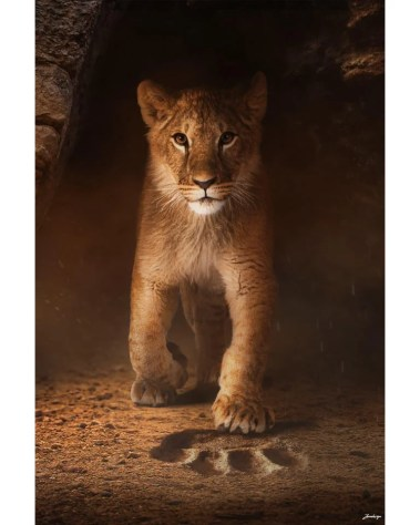 Large Surreal Lion King Big Cat Portrait Animal Wildlife Surreal Photography by Zenja Gammer