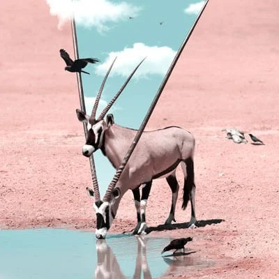 Large Oryx African Animal Wildlife Surreal Photography by Julien Tabet