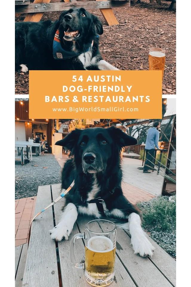 dog friendly guide austin 2