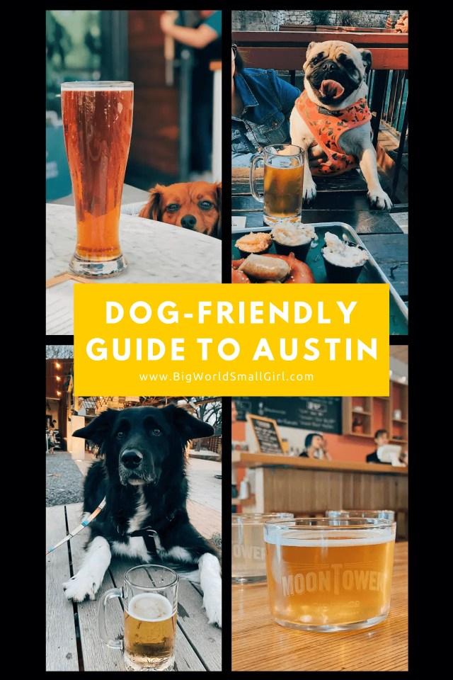 dog friendly guide austin 3